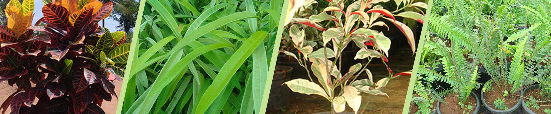 Indoor Plants Online India Buy Indoor Plants Garden World
