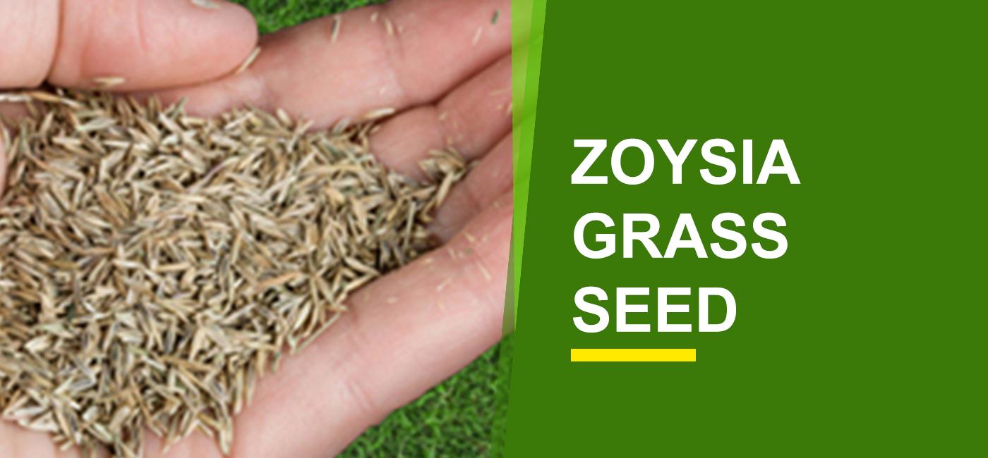 Zoysia Grass Seed Online India | Buy Zoysia Grass Seed
